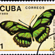 Postage stamp shows butterfly — Stock Photo