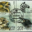 Postage stamps set birds theme — Stockfoto