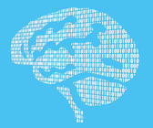 Brains — Stock Photo