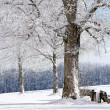 Stock Photo: Winter Tree, Germany