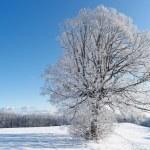 Winter Tree, Germany — Stock Photo