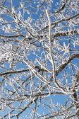 Winter tree background. — Stock Photo