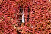 Autumn window — Stock Photo