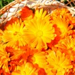Basket with bright orange marigolds — Stock Photo #1031230
