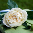 White peony flower on heap of books in — Stock Photo #1032547