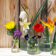 Spring flowers display on wood backgroun — Stock Photo