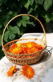 Bright fresh calendula flowers in a bask — Stock Photo