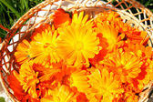 Basket with bright orange marigolds — Stock Photo
