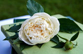 White peony flower on a heap of books in — Stock Photo