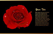 Romantic Card With Red Rose — Vecteur