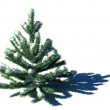 图库照片: Green Fir tree With Snow