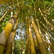 Foto de Stock  : Bamboo with leaf against sky.