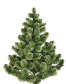 Green christmas pine without decoration. — Stock Photo