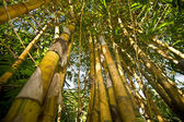 бамбук с листьев против неба. — Стоковое фото