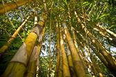 Yaprak gökyüzü ile bir bambu. — Stok fotoğraf