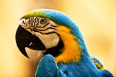 Head of bird parrot. — Stock Photo