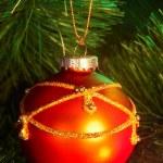 Christmas red ball on  fir tree. — Stock Photo #1337360