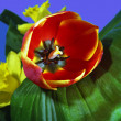 A red tulip lies on a green leaf. - Stock Photo
