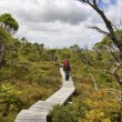 Hiking along a boardwalk — Stock Photo