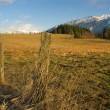 Rural Pasture - Stock Photo