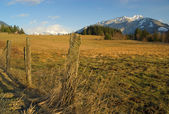 Rural Pasture — Stock Photo