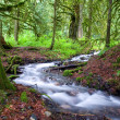 Stock Photo: Mossy Forest Stream