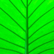 Abstract Tropical Leaf — Stock Photo