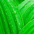 Stock Photo: Wet leaf abstract