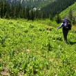 Stock Photo: Meadow hiker