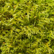 Moss Abstract — Stock Photo