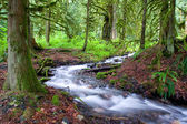 Mossy Forest Stream — Stock Photo