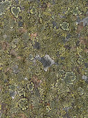 Lichen Abstract — Stock Photo