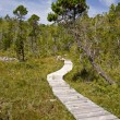 Forest boardwalk — Stock Photo