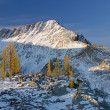 Mt Frosty larches — Stock Photo