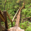 Log bridge and trail - Stock Photo