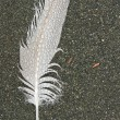Raindrops on a feather — Stock Photo