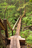 Log bridge and trail — Stock Photo