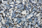 Mussell shell abstract — Stock Photo