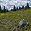 Alpine meadow — Photo