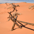 Desert Fence — Stock Photo
