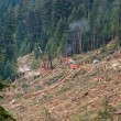 Stock Photo: Clear-cut logging operation