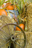 Fall harvest display — Stock Photo