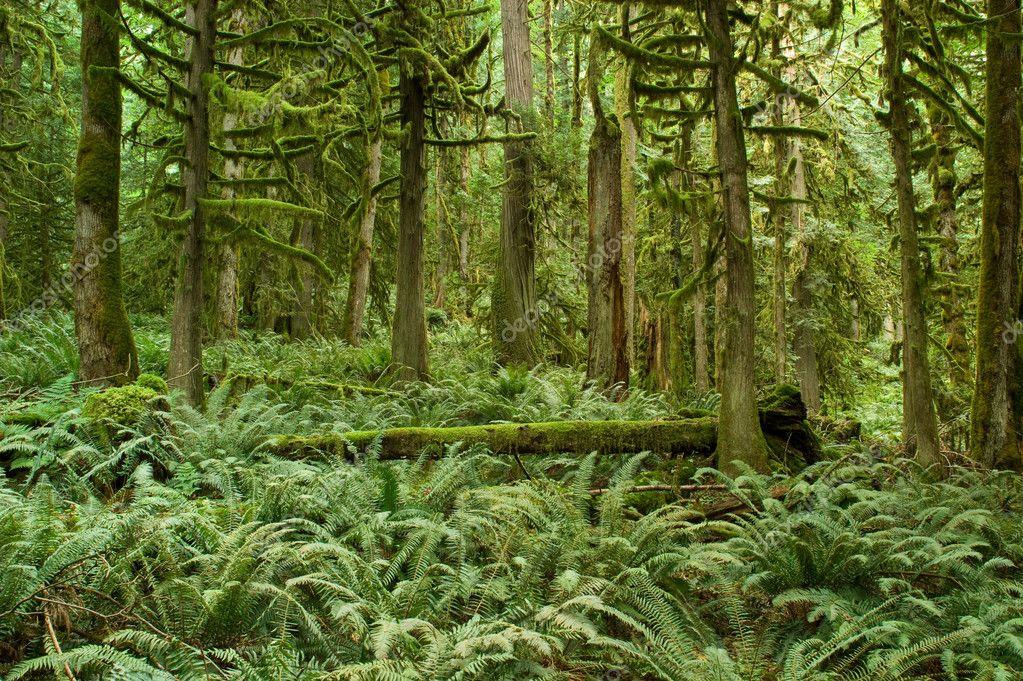 Pacific Northwest Rainforest Stock Photo 169 Eppic 1162211
