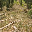 Stock Photo: Avalanche Debris