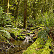 Rainforest Creek - Stock Photo