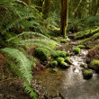 Rainforest stream - Stock Photo