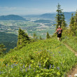 Stock Photo: Alpine meadow hiker