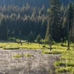 Misty morning forest lake — Stock Photo #1175370