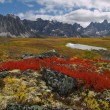 Tombstone Pass Yukon Territory — Stock Photo #1175458