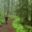 Stock Photo: Pacific northwest forest hiker